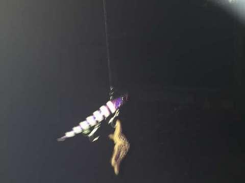 151102④rikusiki_purple-glow