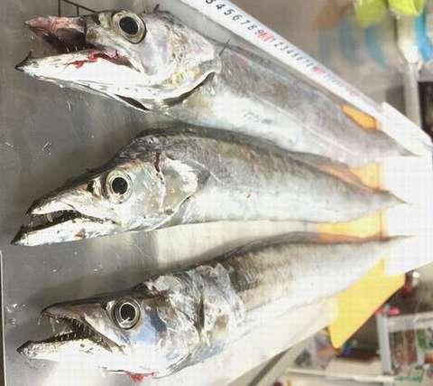 151202⑤saber-fish_face