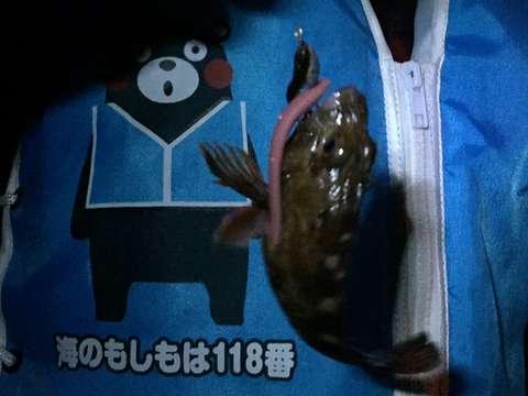 160422④kumamon-to-gasshi-
