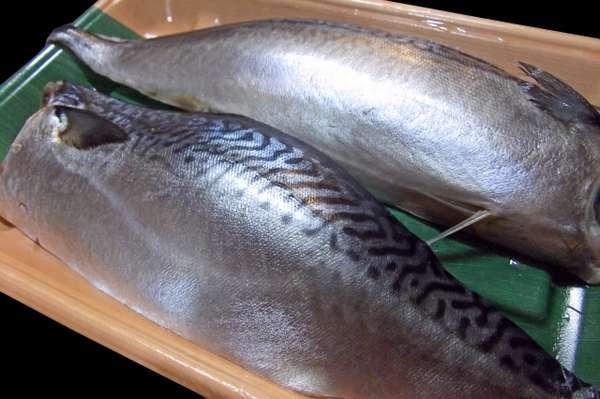170616_saba_kirimi_anisakisu