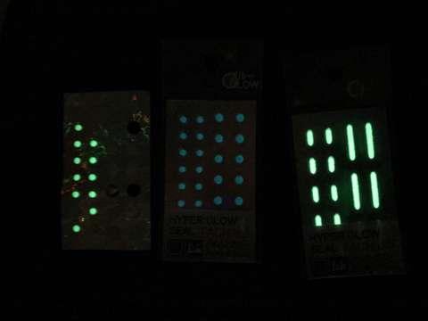 170809④eging-seal-glow